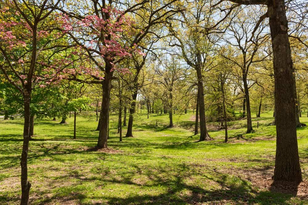Spring weather in Wentzville, MO